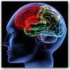 brain image 3